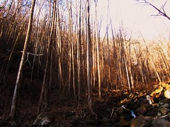 forest (LauraSorrells) Tags: trees winter light painterly forest woods warmth appalachia amicalola winterlight lightplay