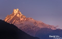 "Annapurna, Nepal - Sunset over ""Fish Tail"" (GlobeTrotter 2000) Tags: trip travel nepal sunset camp mountain fish snow tourism ice expedition nature face landscape frozen asia heaven god outdoor hiking south iii tail dramatic peak visit glacier adventure explore climbing ii sacred abc matterhorn peaks himalaya shiva circuit pokhara base annapurna sanctuary himalya himal machhapuchhre i machapuchare"