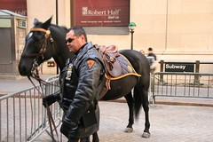 NYPD horse (Lonfunguy) Tags: newyork nypd nypdhorse