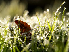 (myu-myu) Tags: morning nature field japan frost bokeh panasonic 45mm wildgrass   dmcg3