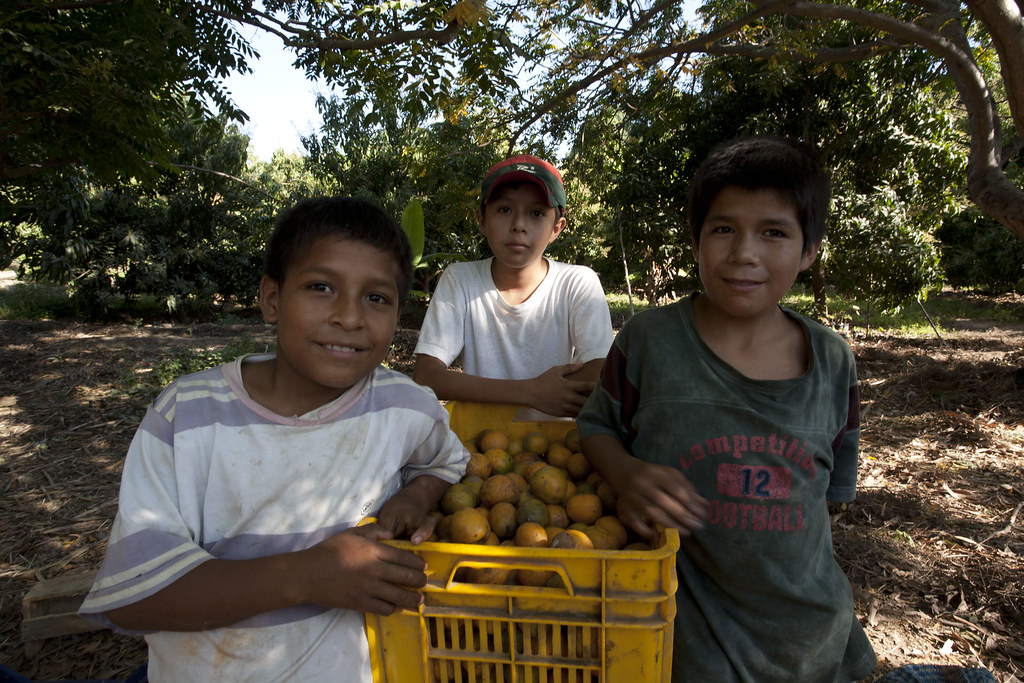 Parcelle mangues, plantation de Manuel J. Urbina BENITES, Enfants