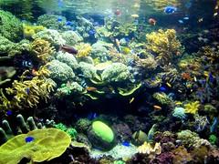 Fish and Reefs (Pritha B) Tags: sentosa underwaterworld