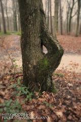 Thurisaz  (Myrkwood666) Tags: symbol pagan rune futhark asatru thurisaz seelenwinter mrkskygge myrkwood666