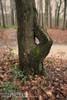 Thurisaz ᚦ (Myrkwood666) Tags: symbol pagan rune futhark asatru thurisaz seelenwinter mørkskygge myrkwood666