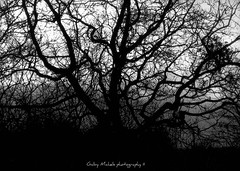 (needs title) (Zandgaby) Tags: sunset shadow cloud tree backlight dark scary twilight sinister branches gothic dramatic fantasy mystic textured nightfall mythical treepeople gabymichels