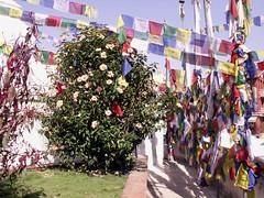 (Nepal Okt.09) (Syydehaas) Tags: nepal trekking pagoda asia asien vishnu native gates buddha kali stupa tibet shangrila kathmandu mustang himalaya shiva markt hindu patan everest boudhanath pokhara kamasutra annapurna cultural champa dalailama namaste gompa pashupatinath sadu pagode thamel mnch nilgiri kumari durbarsquare jomsom kagbeni muktinath marpha buddhismus ethic knigreich phewalake abe