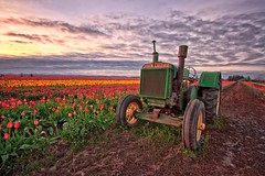 Running like a Deere (CarlaAxtmanPhotography) Tags: tractor oregon sunrise tulip woodenshoe johndeere woodburn