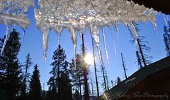 Icicles with Sun (Mehraj Mir) Tags: india kashmir icicles gulmarg sungulmargkashmirindia