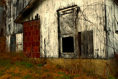 That Empty Black Window (SunnyDazzled) Tags: door old winter black cold history abandoned barn rural tile ceramic wooden construction vines pennsylvania decay farm empty historic haunted spooky doorway weathered siding terra widow cotta 1890 nyce eshbeck