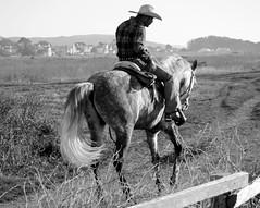 Macho (Cepreu K) Tags: california horse cowboy macho halfmoonbay muchacho challengeyouwinner flickrchallengegroup flickrchallengewinner cepreu thepinnaclehof мучачо tphofweek131