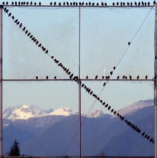 122 Starlings