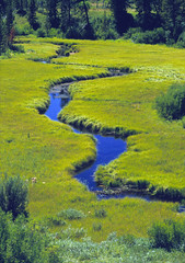 "Meandering Stream Through A Meadow (IronRodArt - Royce Bair (""Star Shooter"")) Tags: park reflection green nature ecology meadow environmental peaceful grand environment greenery meander wyoming polarized polarization meandering polarize tetonnational streamcreek christiancreek lushsky"