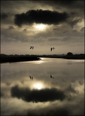 Passing Through (adrians_art) Tags: trees sky cloud water birds reflections flight rivers blackheadedgulls