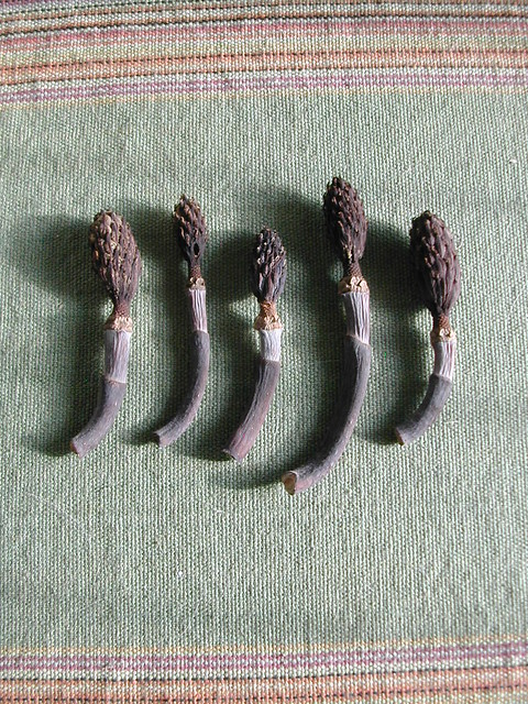 Artichoke Pods on Aztec fabric