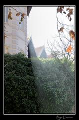 Rays of Light (Hugo Carvoeira) Tags: autumn trees light portugal nikon branches ii rays algarve nikkor vr sunbeams caldas 18200mm monchique d7000