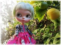 lemon flowers on the wall