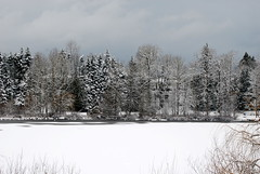 MILL LAKE SEASONS:  A cold and snowy day on Mill Lake, Abbotsford,  BC. (vermillion$baby) Tags: abbotsford blackandwhite january1612 milllake snow vista white ice winter mill lake bc canada fraservalley landscape seasons milllakeseasons wetlands