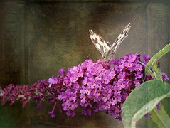The butterfly tree (mamietherese1) Tags: expression textures shining magicalmoments ict ourtime coth callingallangels greatphotographers thegalaxy sweetfreedom physis contemporaryartsociety flowerwithinsect romanceintheair memoriesbook macroelsalvador natureselegantshots theenchantedcarousel specialpictures flickrflorescloseupmacros artistictreasurechest greatshotss legacyexcellence magicunicornverybest magicunicornmasterpiece sailsevenseas natureandpeopleinnature fugitivemoment mygearandme mygearandmepremium ringexcellence greaterphotographers untouchabledream lovelymotherearth itsallaboutflowers odetojoyodeàalegria flickrstruereflection1 flickrstruereflection2 artcityart