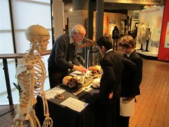 Discovering the bones in the human skeleton