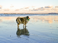 cloudy (Hermio-Black) Tags: sunset sea beach dogs cane collie candy lassie thelittledoglaughed