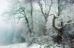Wintericed (@hipydeus) Tags: winter ice snow cold trees mist bavaria iphone stitched ✪ landscape nature