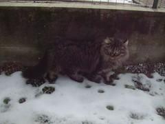 My sweet Lucy (Simply Viola) Tags: cats animals kittens felini gatti animali gattini
