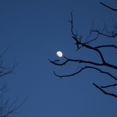 Tree catches the moon (Dan:Brown) Tags: moon tree night s90