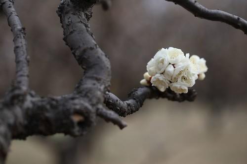 立春を過ぎて・・・春を待つ