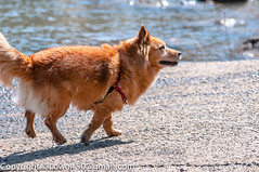Dogs George Rogers Park- April-2014_DSC01060038.jpg (orig_lowolf) Tags: usa dog bird oregon nikon lakeoswego georgerogerspark d300s sigmaaf150500mmf563apodgoshsm