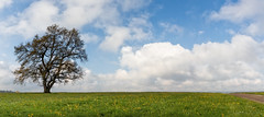 Way to nowhere... (FAM Martin Z) Tags: flowers sky panorama flower tree colors beautiful weather clouds zeiss de bayern deutschland day nimbus pano dandelion cumulus gras allgu distagon lwenzahn mauerstetten distagont2815 distagont2815ze canon5dsr 5dsr