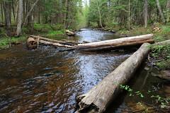 018 Haymeadow Creek (jgagnon63@yahoo.com) Tags: up creek forest spring woods stream may upperpeninsula uppermichigan troutstream hiawathanationalforest deltacountymi haymeadowcreektrail canonsl1 michigantroutstream