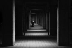 leave (Hiro.Matsumoto) Tags: street blackandwhite monochrome japan night nikon yokohama