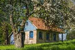 Cottage & apple tree (Martin von Ottersen) Tags: tree apple rural cottage haus bloom blte apfelbaum sel55210