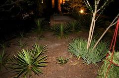 IMG_8649 (jalexartis) Tags: lighting nightphotography night yard dark landscape lights backyard landscaping shrub yucca shrubbery yuccaplant