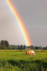 Chasing rainbows (Howard Ryder) Tags: horses field weather rainbow nikon cloudy sunday pasture saturation nik washingtonstate tamron everett wx eveningglow snohomishcounty lakestevens d810 ebeyisland lrcc pscc upperleftusa ryderphotographic howardryder tamronsp7002000mmf28divcusd