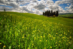 Tuscan landscape... (ValeCrio) Tags: tuscany landscape cypresses siena crete canon valeriocolantoni nature clouds sky flowering wheatfield valdorcia sanquiricodorcia