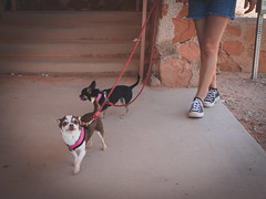 P5300102 (dicky c) Tags: valleyoffire dogs nature nevada hike valleyoffirestatepark olympus918mm omdem5ii