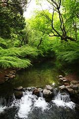(LouisQiu) Tags: china travel leave photography scenery stream view tea hangzhou              jiuxi