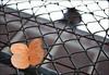 Le papillon (• CHRISTIAN •) Tags: orange streetart art 35mm fence butterfly nikon focus dof montréal bokeh papillon québec clôture mtlguessed d80 gwim