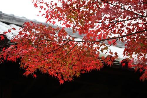 美しい秋風景