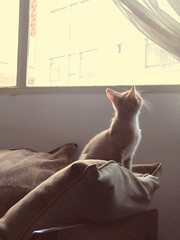 Lola en la ventana (consuelathan) Tags: pet cute animal animals cat kitty gato gata animales mascotas gatita babycat gatito