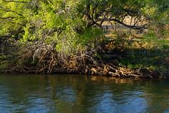 DSC00721 (Douglas Dreher) Tags: zambia zambezi livingstone zambeziriver