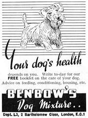 Benbows Dog Mixture (hairydalek) Tags: dog magazine advert mixture lilliput benbows