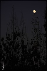 Hide And Seek With Moon (Behzad No) Tags: life moon tree night sad iran live shiraz fars nikond90 behzadno