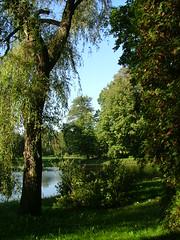 Palace park - Pszczyna, Upper Silesia, Poland (LeszekZadlo) Tags: park trees naturaleza lake green nature water river landscape spring natureza poland polska swamp polen landschaft polonia pologne przyroda silesia staw pejza uppersilesia