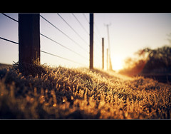 Frosty fence friday (Stuart Stevenson) Tags: uk winter light cold sunrise fence photography golden scotland warm glow frosty lensflare colourful posts sparkling shallowdepthoffield defocus h