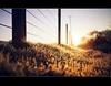 Frosty fence friday (Stuart Stevenson) Tags: uk winter light cold sunrise fence photography golden scotland warm glow frosty lensflare colourful posts sparkling shallowdepthoffield defocus hss lanark clydevalley southlanarkshire shootingintothelight thanksforviewing canon5dmkii stuartstevenson ©stuartstevenson