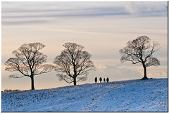 Three Trees (Maria-H) Tags: park uk england snow tree silhouette cheshire panasonic stockport lyme disley 100300 gh2 dmcgh2