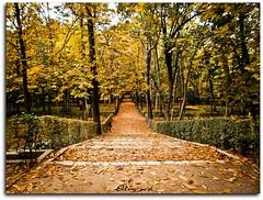 Camino hacia el retiro (AlbaMD Photography) Tags: parque hoja camino final rbol otoo retiro rama parquedelretiro caida elretiro caer