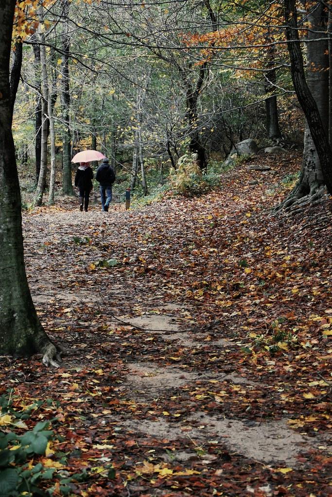 Paraguas para dos